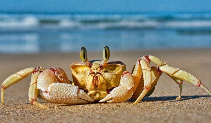 亚搏体育app官网特种螃蟹