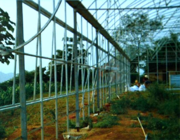温室案例2