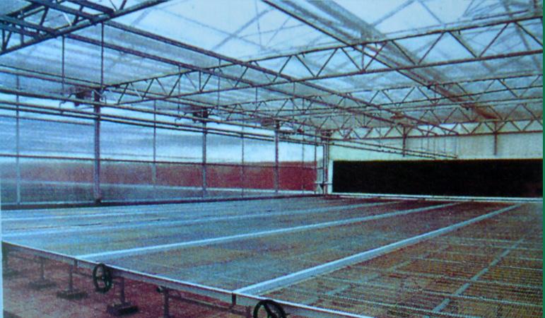 钢结构温室