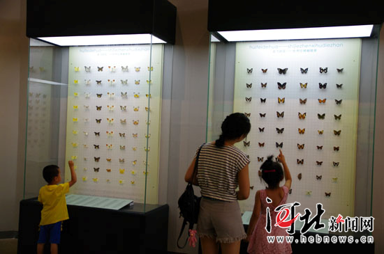 《世界珍稀蝴蝶展》在河北博物院开展 零距离赏蛹化蝶