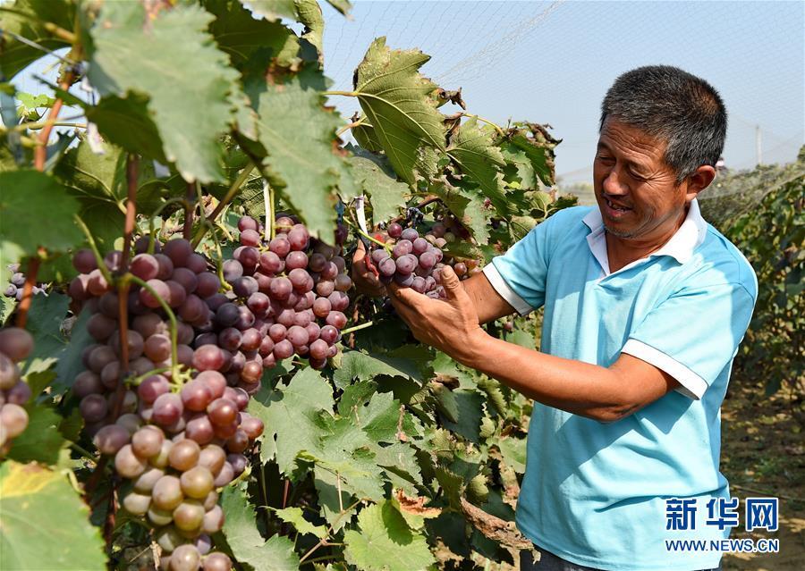河北邢台:林业生态扶贫20万农民受益