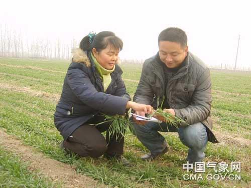 菏泽:气象人员实地调查冬小麦长势