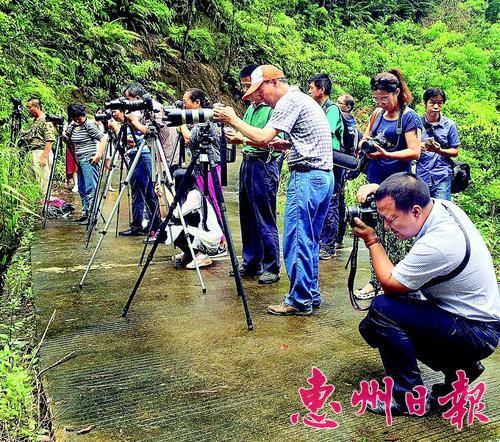 博罗·泰美生态旅游摄影大赛启动仪式暨第一次摄影创作活动