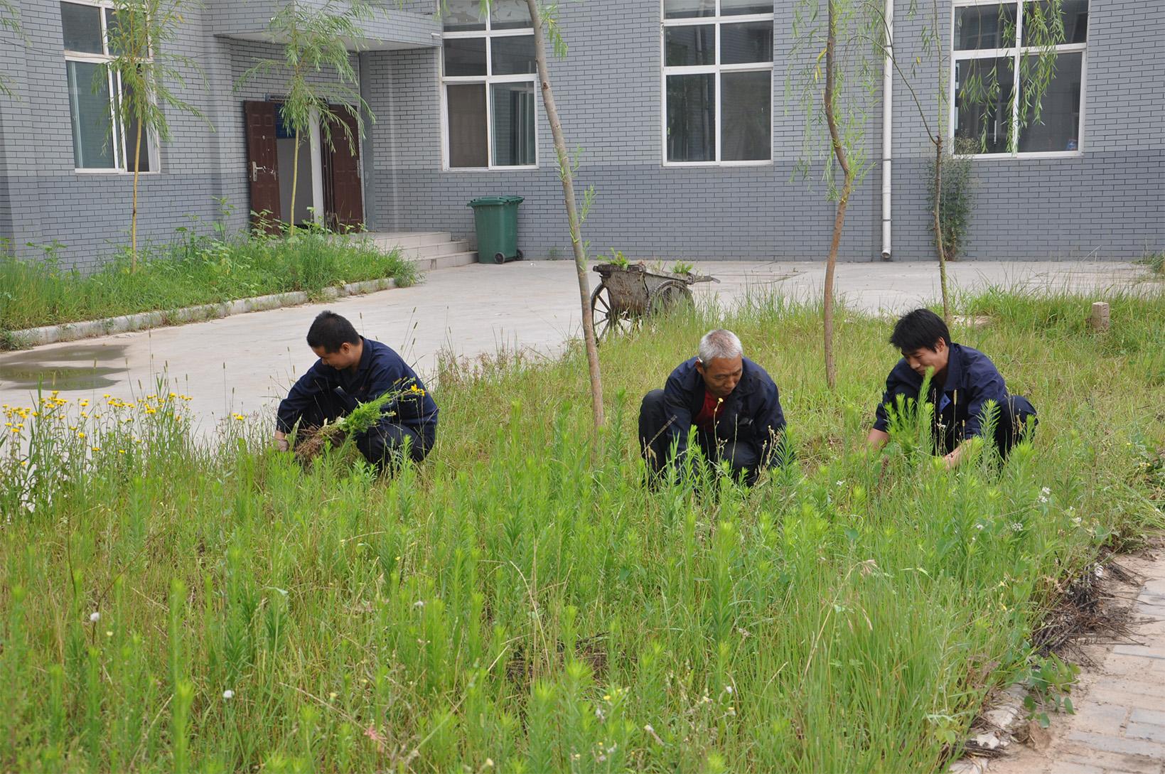 公司员工在厂区除草