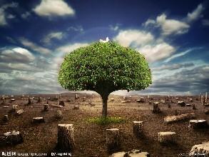 环境管理体系