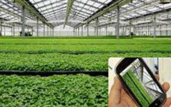 智慧绿态农业/花卉大棚 环境云监测物联网系统