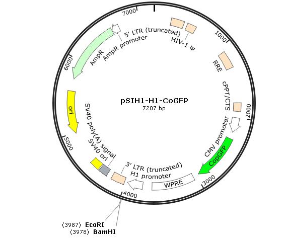 pSIH1-H1-CoGFP
