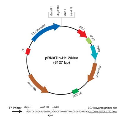 pRNATin-H1.2/Neo