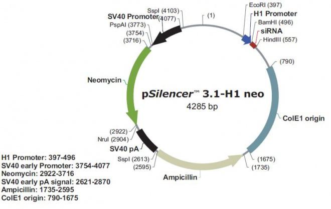 pSilencer 3.1-H1 neo
