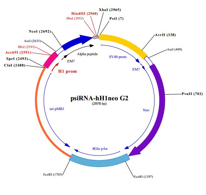 psiRNA-hH1neo G2