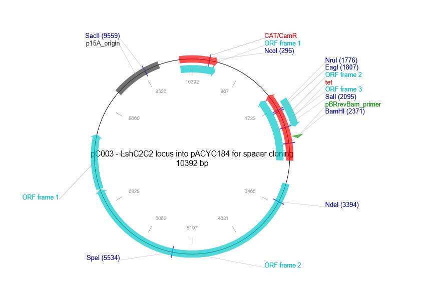 pC003-pACYC184-LshC2C2