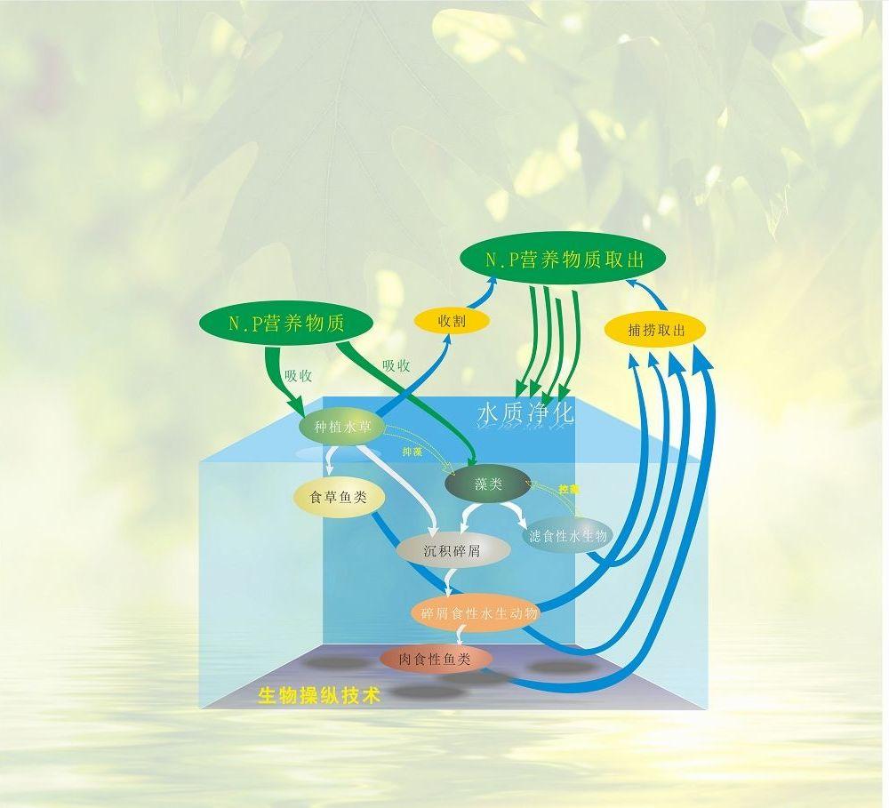 去水体富营养化生物操纵技术