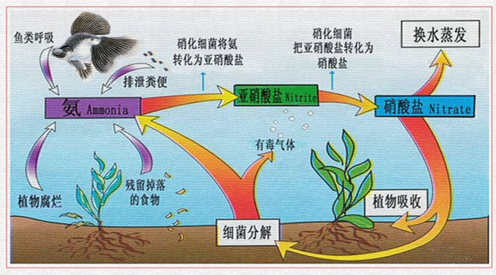 生物载体和高效生物基技术