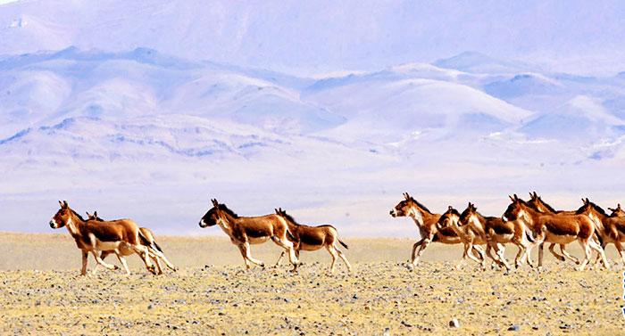 西藏羌塘国家级自然保护区