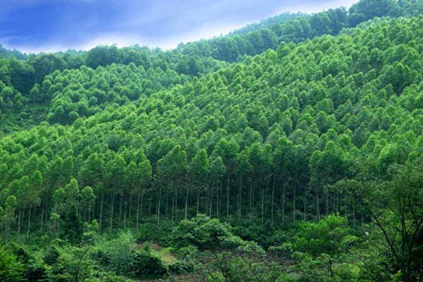 張建龍建議完善森林質量精準提升保障政策