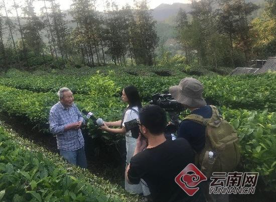 """【美麗中國長江行】臺地茶之父""""肖時英堅持生態植茶重視茶文傳承"""